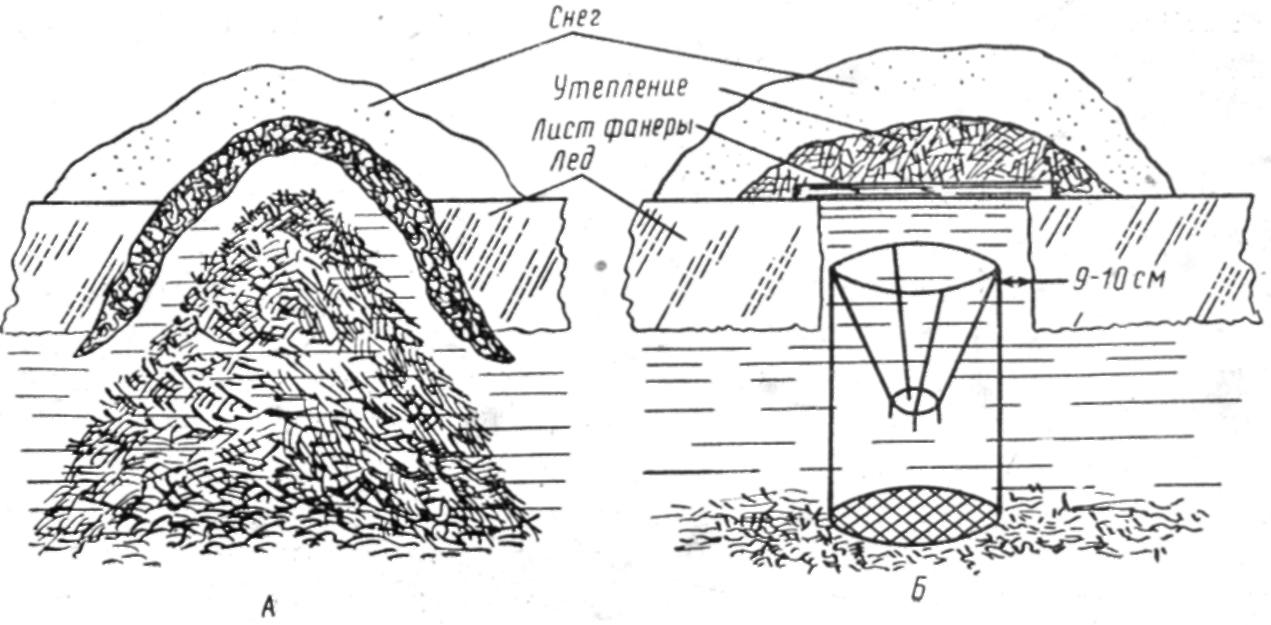Как ловят андатру