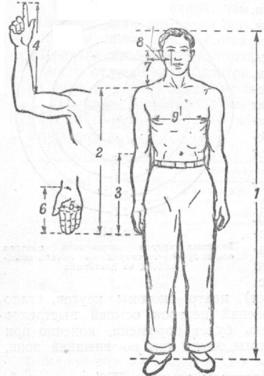 Обмер частей тела стрелка для подбора прикладистого для него ружья