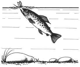 ловля рыбы на комара