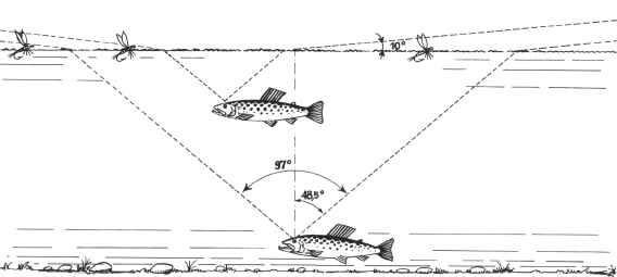 Рис. 63. Зрительный конус наблюдения рыбы.