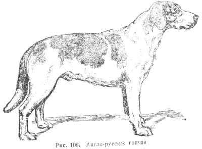 Породы гончих собак, В помощь охотнику, Библиотека, Охота без границ