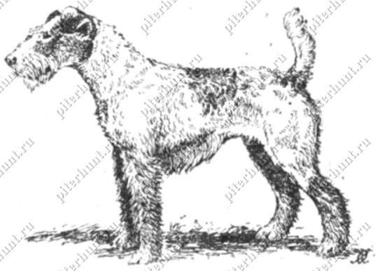 гладкошерстные собаки небольшого роста фото