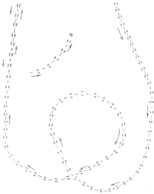 Схема малика зайца-русака