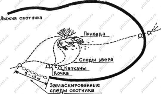 Схема установки капканов у