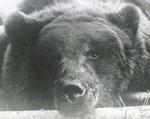 BearKut аватар