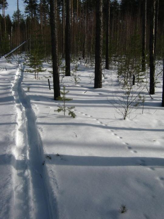 """по следам человека, """"в марте все лыжни ведут на ток"""""""