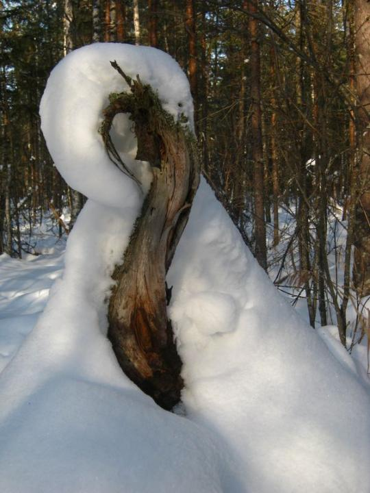 последняя скрипка зимы