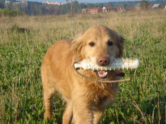 Идеология воспитания, обучения и натаски ретривера, Воспитание собаки, Библиотека, Охота без границ