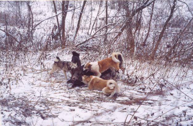 Форум охота